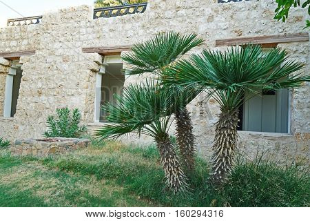 Palm trees in a garden on the house background