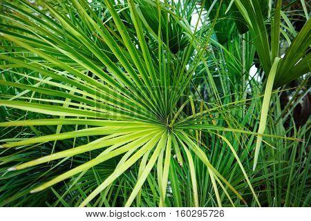 Palms in the botanical garden
