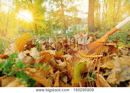 Gathering fallen leaves with fan rake in autumn park, close up view
