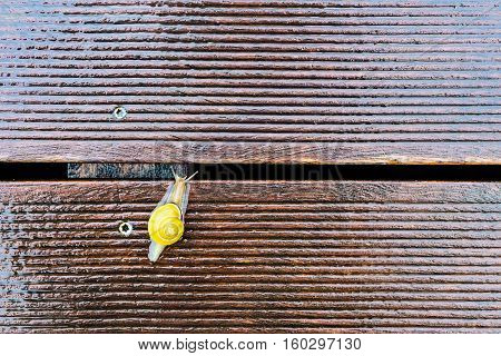 Snail On The Wet Terrace - Shallow Depth Of Field