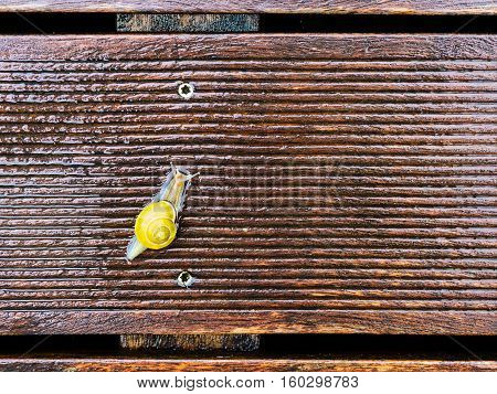 Snail On The Wet Terrace