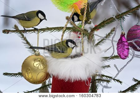 Titmouse sitting on the branches of spruce decorated for Christmas. Selective focus