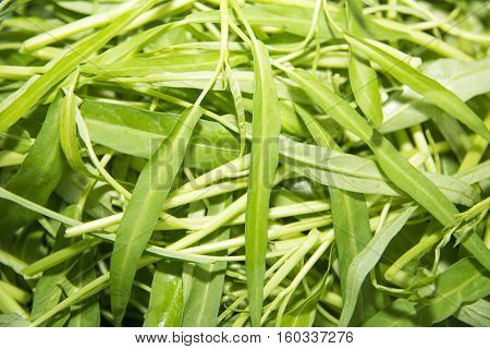 Closeup of fresh Water spinach use for background