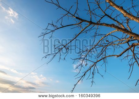 Abstract Of Dry Branch On Blue Sky Background.