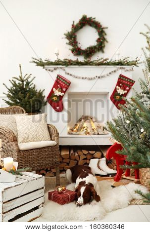 Christmas interior. Lovely dog by the fireplace