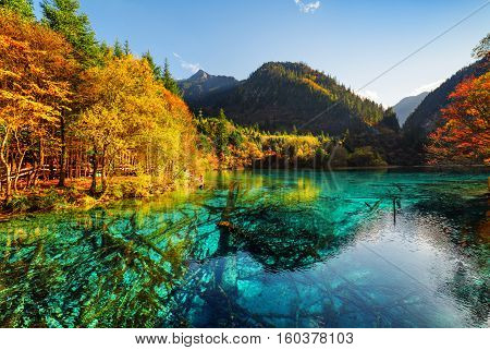 Submerged Tree Trunks In Azure Water Of The Five Flower Lake