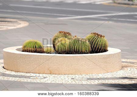 Round Succulent Plants