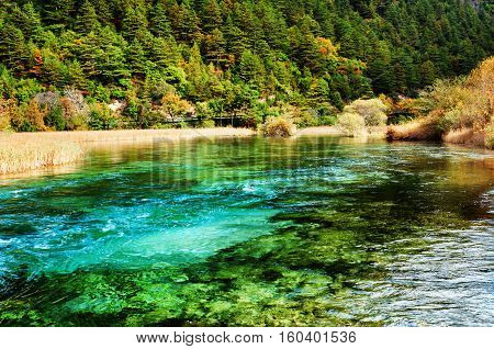 Beautiful River With Azure Crystal Water Among Evergreen Woods