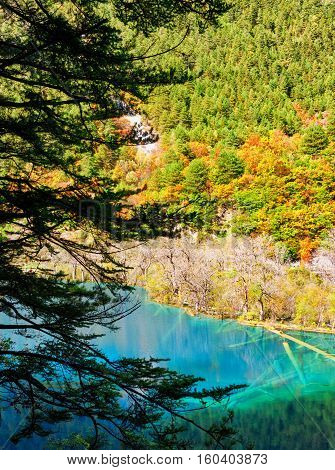 Lake With Azure Crystal Clear Water And Submerged Tree Trunks