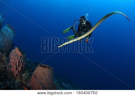 Diver With Sea Snake Nderwater Diving Picture Ocean