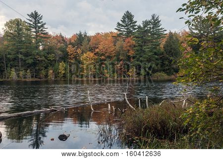 Hiawatha National Forest decorated by autumn gold on the Irwin Lake, Michigan, USA