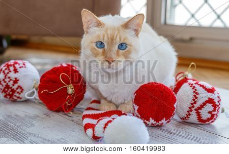 Cat And Christmas Balls And Cap