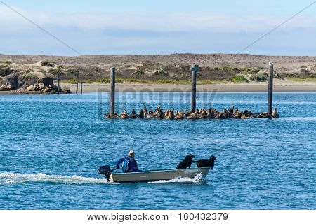 boat passing by a group of sea lions in Morro Bay California