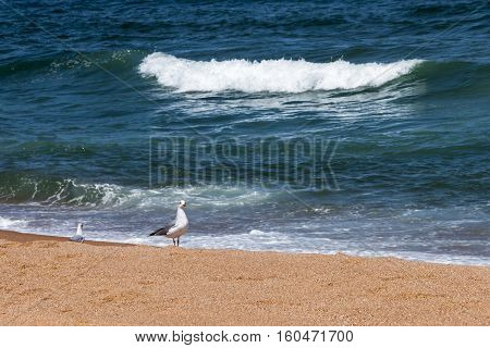 Sea Gull On Beach With Breaking Wave