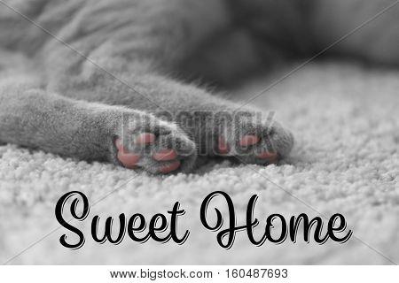 Cat's paws on furry carpet, closeup. Text SWEET HOME.