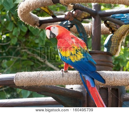 Bright and colourful Macaw bird perched on a post
