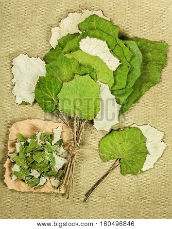Coltsfoot foalfoot. Dried herbs for use in alternative medicine spa herbal cosmetics herbal medicine preparing infusions decoctions tinctures powders ointments butter tea bath.
