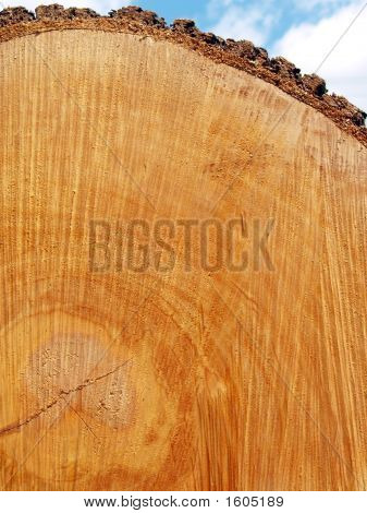 """Texture"": Red Oak Log End"