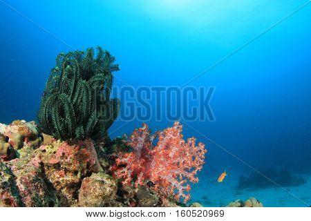 Coral reef underwater in sea