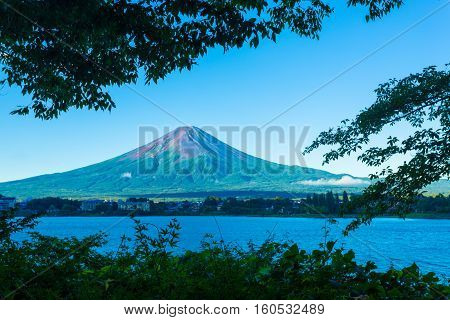 Mount Fuji Framed Trees Morning Kawaguchiko Lake