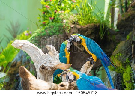 Blue And Yellow Macaw Bird Clings To A Tree Branch,