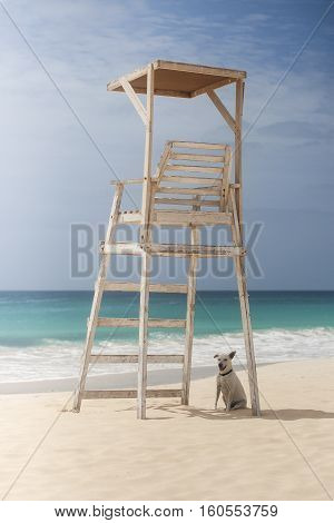 Dog sitting in a shade of lifeguard tower on the beach.