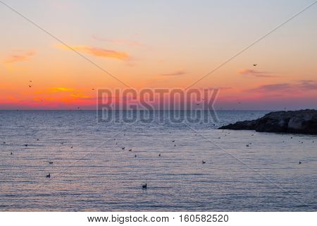 Beautiful sea during sunset and many birds at summer evening