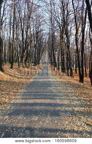 Straight autumn alley in the park. Seasonal outdoor scene