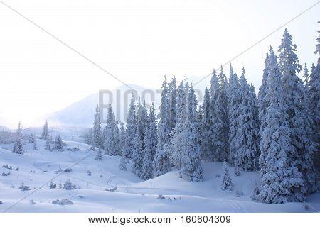 White winter in West Tatra mountaints Slovakia