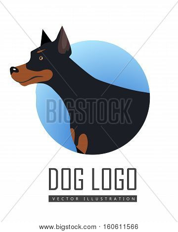 Dog vector logo in flat style. Doberman bust in the blue circle illustration for pet shop, breed club logotype, app icon, animal infogpaphics elements, web design. Isolated on white background