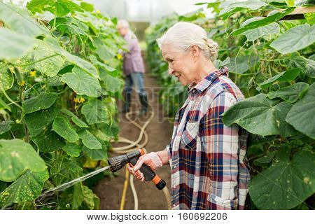 farming, gardening, agriculture and people concept - happy senior couple garden hose watering plants or cucumber seedlings at farm greenhouse