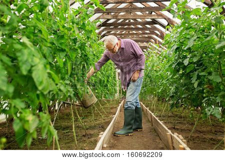 farming, gardening, agriculture and people concept - happy senior man with watering can at farm greenhouse