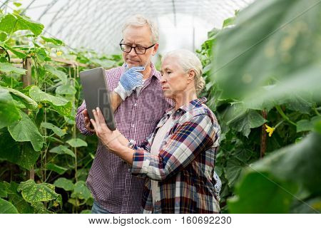 farming, gardening, agriculture and people concept - senior couple with tablet pc computer at farm greenhouse