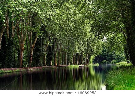 Poplar trees along the French canal