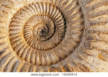Closeup of an ammonite prehistoric fossil on a ceramic textured background