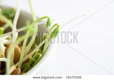 Lentil Beansprout Bowl Macro