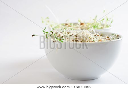 Beansprout Bowls