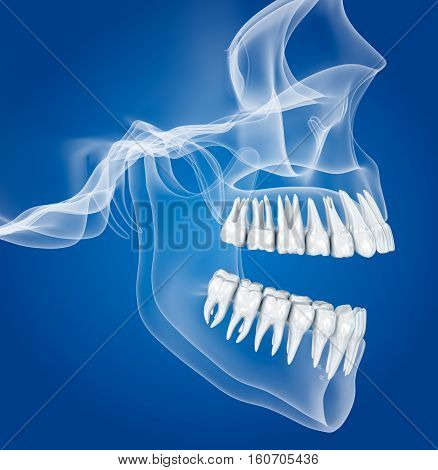 Transparent scull and teeth xray view . 3D illustration .