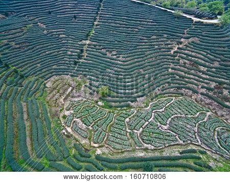 Aerial Photography On Top Of The Mountain Tea Garden Landscape