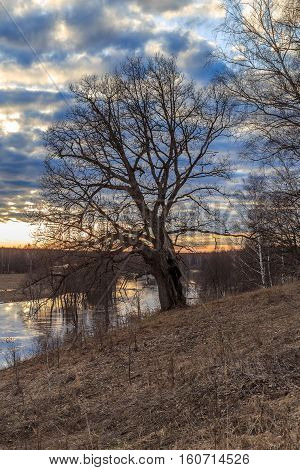 Oak Tree On The Bank Of The River