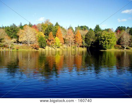 Lake Mclaren, New Zealand.