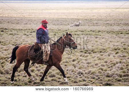 PUNTA ARENAS, CHILE-NOV. 13, 2016:  Outside of Punta Arenas on the pampas of Patagonia, a gaucho on horseback tends his sheep while riding along the fence line of the sheep ranch.