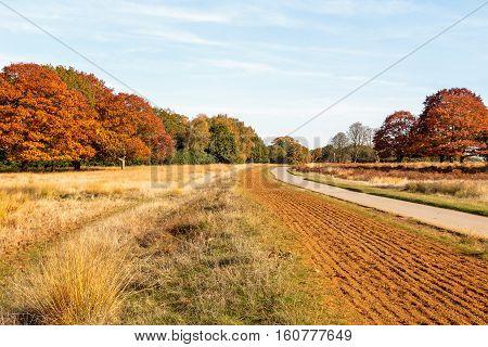 Autumn scene in Richmond Park, London, UK