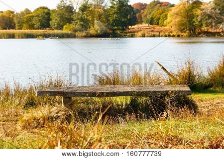Wooden Bench In Richmond Park, London