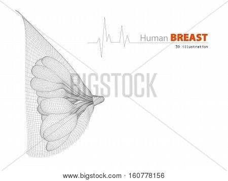 3d Illustration of anatomy of the female breast