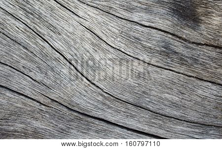 Wooden texture close up photo. White and grey wood background. White old tree near the sea. Curves and lines on rustic timber. Rough timber texture. Sea wood backdrop. Grey old tree blank table image