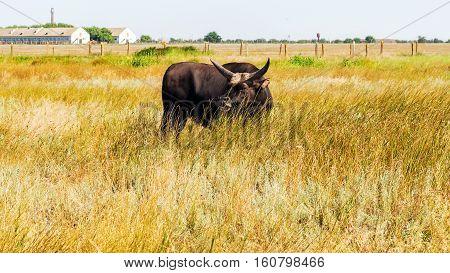 Cattle Farm Cattle Animals In Farming Rural Landscape