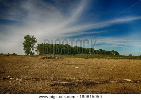 Distant grove of trees with a blue cloudy sky