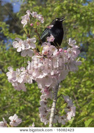 Singing Bird in Blossoms