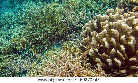 Colorful Hard Corals near Batu Lima, Gam, Raja Ampat. Indonesia